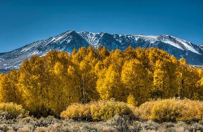 golden-leaves-mountain-2