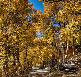fall-leaves-cabin-4