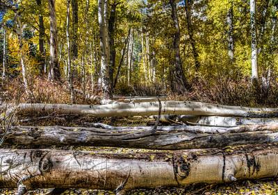 autumn-forest-3