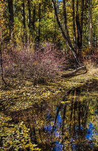 forest-pond-reflection-1