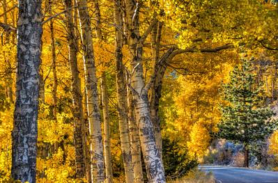 golden-forest-road-2