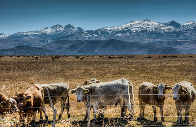 cows-pasture-mountains-1