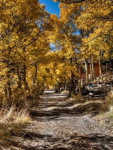 fall-leaves-cabin-5