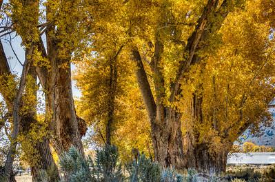 autumn-color-trees-5