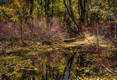 forest-pond-reflection-2-1