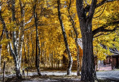 fall-trees-cabin-2