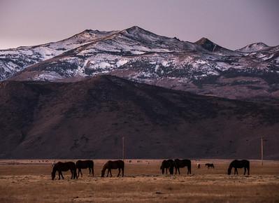 mountain-horses-pasture-1