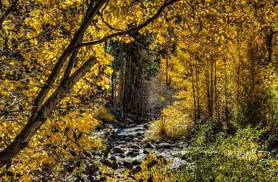 fall-leaves-creek-3