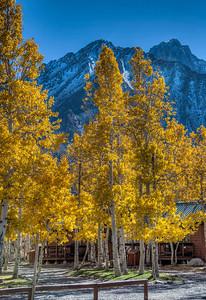 golden-aspens-mountain-2