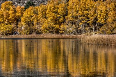 lake-trees-reflection-1