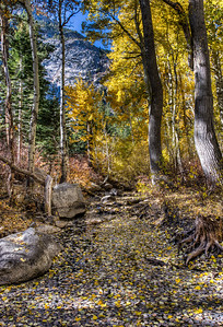 mountain-path-fall-leaves-2