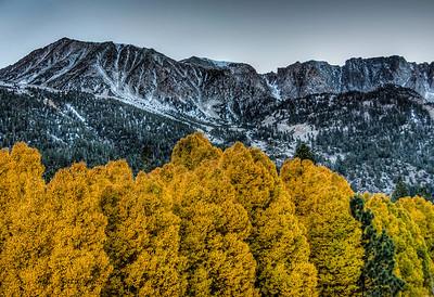 golden-trees-mountains-1
