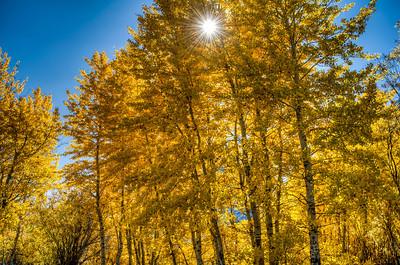 golden-fall-leaves-3
