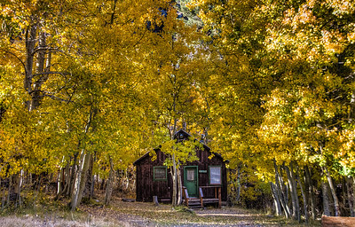 mountain-cabin-leaves-11