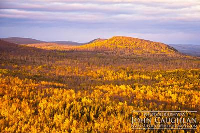 Birch(fall32g)