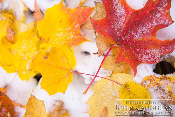 Leaves(snow1d)