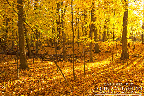 Maples(fall7b)
