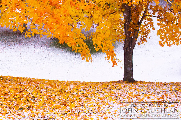 FallColors(snow1d)