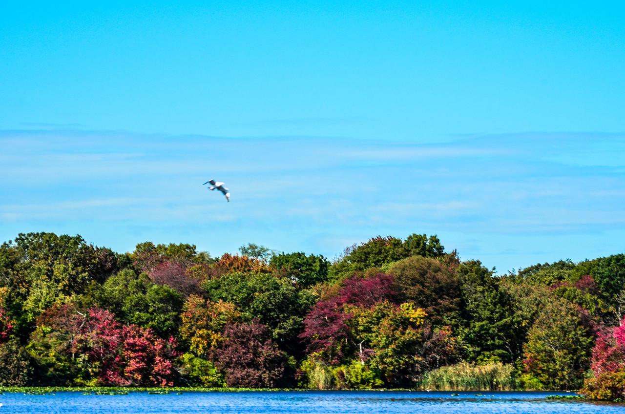 Massapequa Pond 10-12-2013-1-11