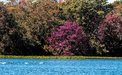 Massapequa Pond 10-12-2013-1-19