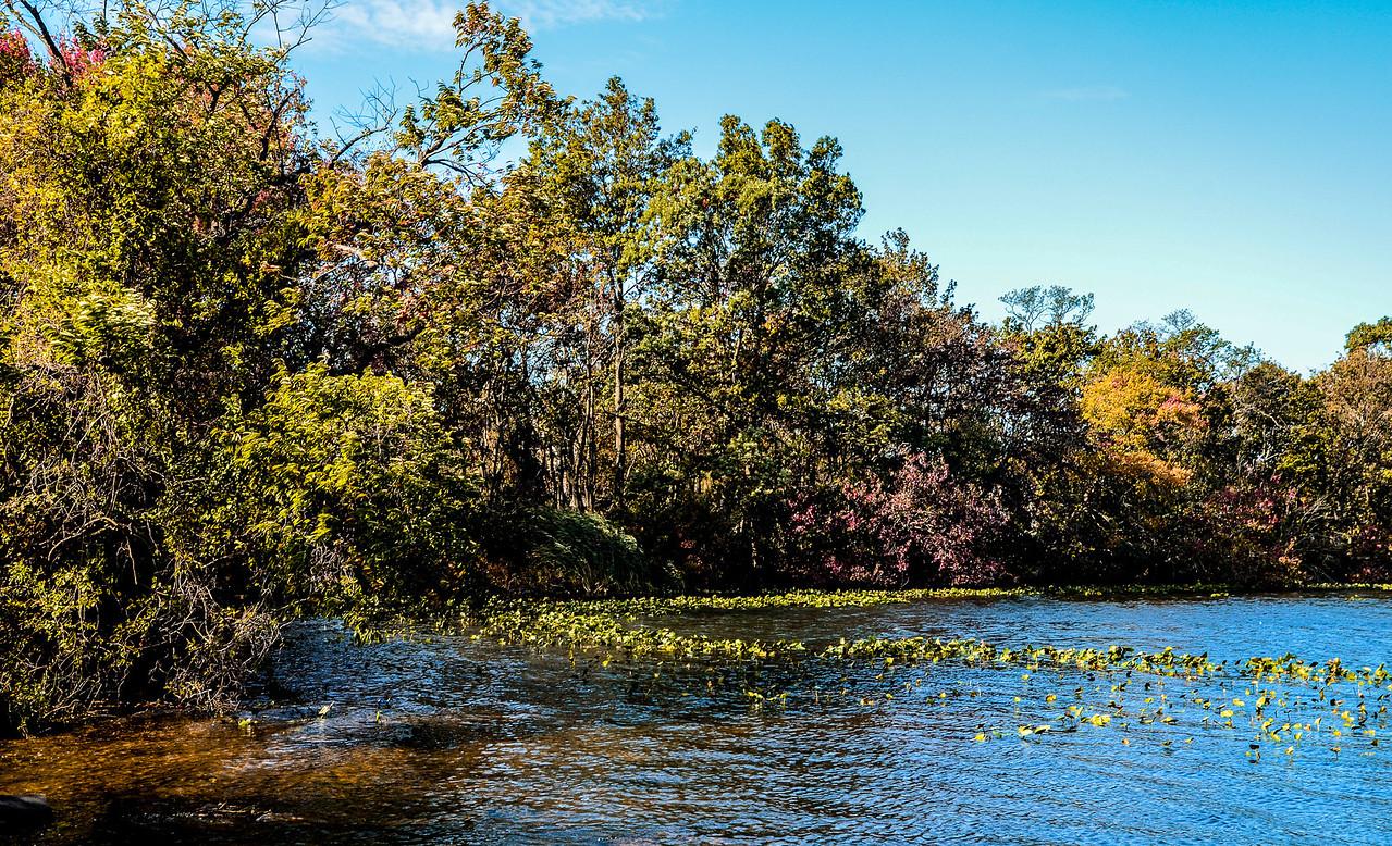 Massapequa Pond10-12-2013-1