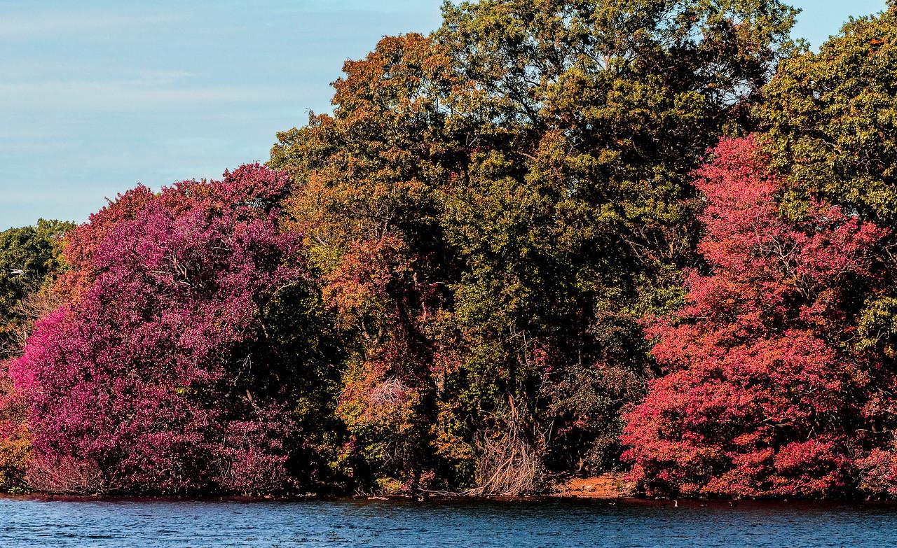 Massapequa Pond Less Blue 10-12-2013-1-23