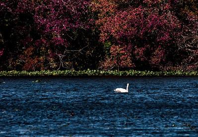 Massapequa Pond 10-12-2013-1-20