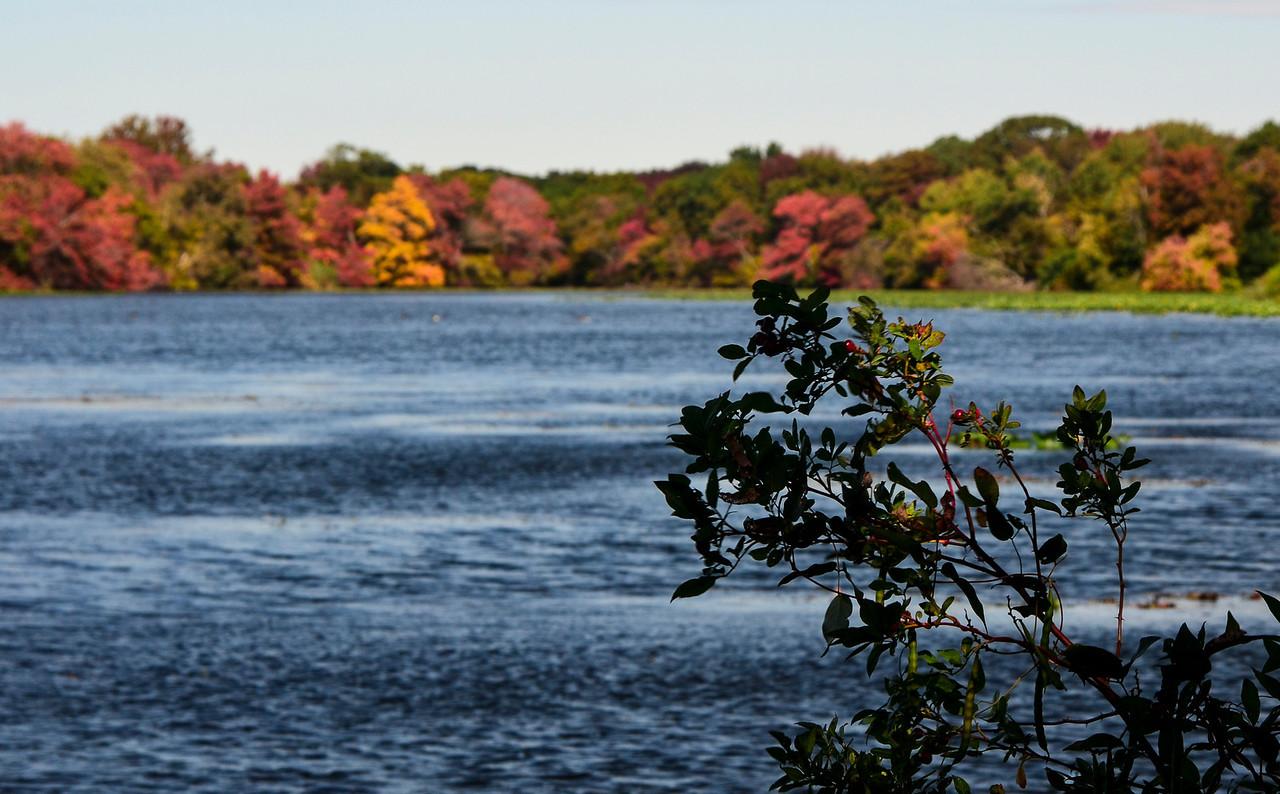 Massapequa Pond Less Blue 10-12-2013-1-8