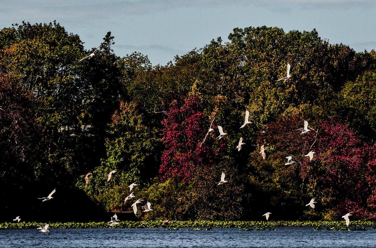 Massapequa Pond Less Blue 10-12-2013-1-20