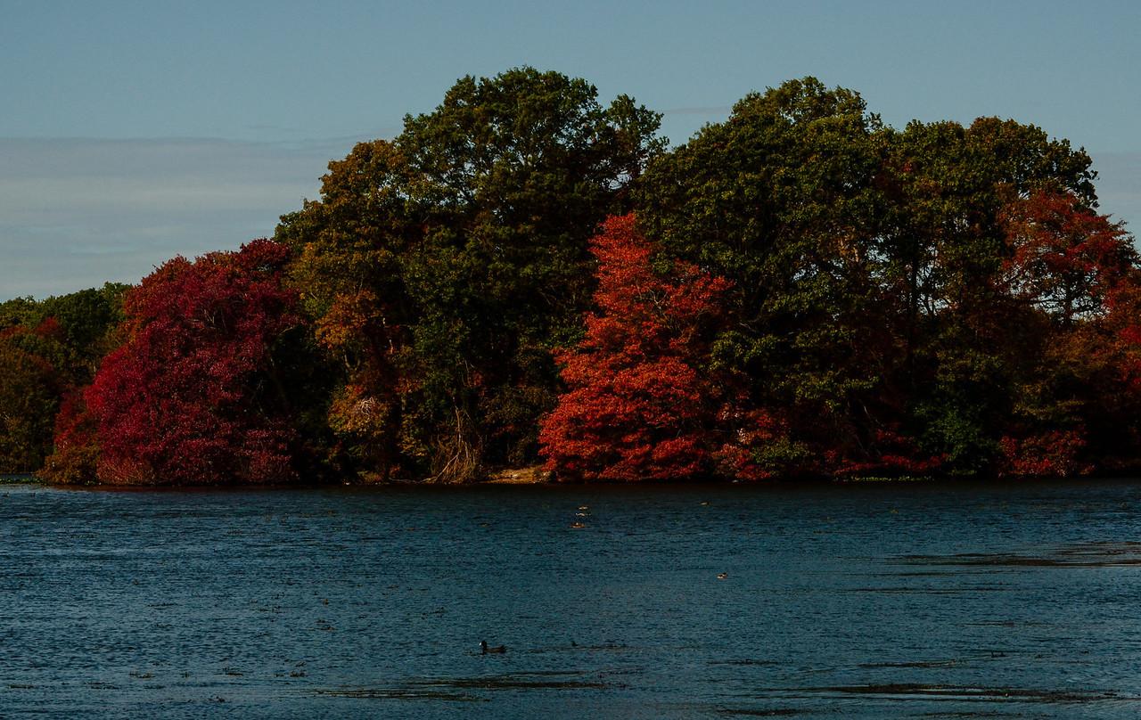 Massapequa Pond 10-12-2013-1-30
