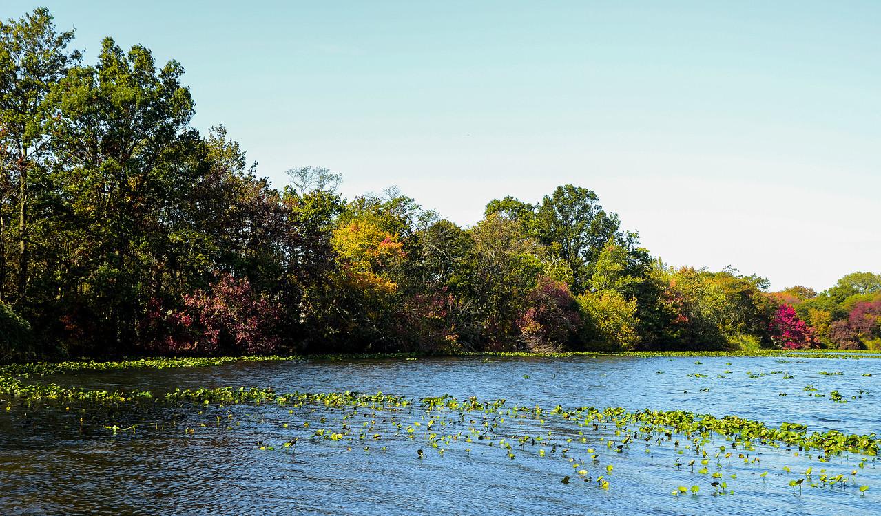 Massapequa Pond10-12-2013-1-4