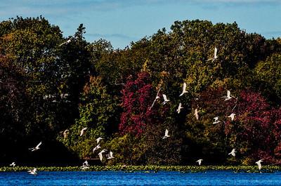 Massapequa Pond 10-12-2013-1-22