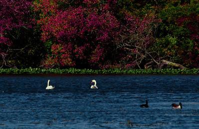 Massapequa Pond 10-12-2013-1-21