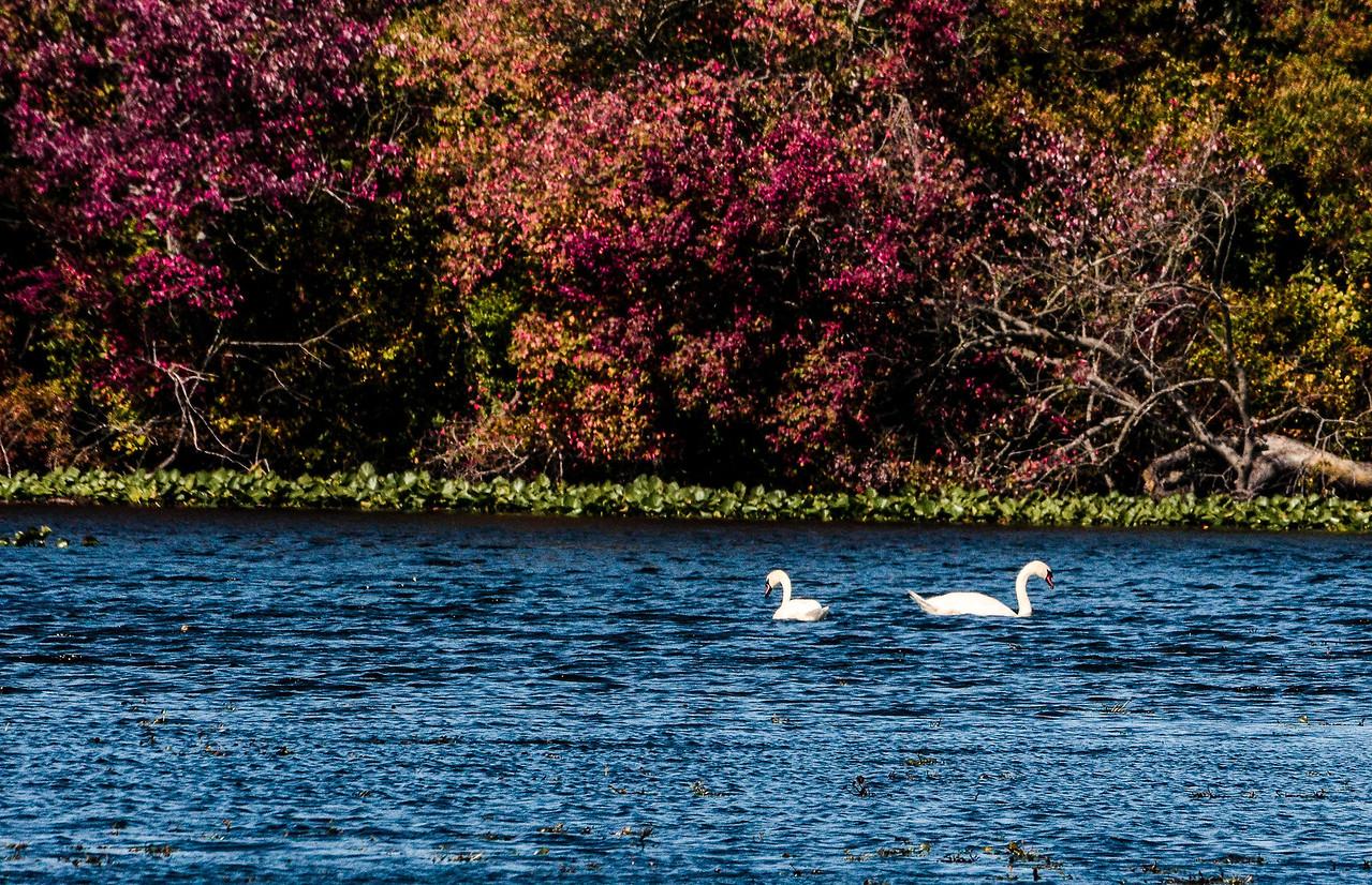 Massapequa Pond 10-12-2013-1-18