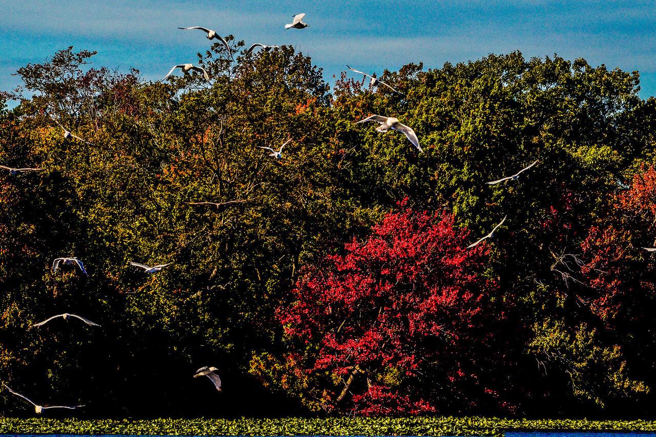 Massapequa Pond 10-12-2013-1-24