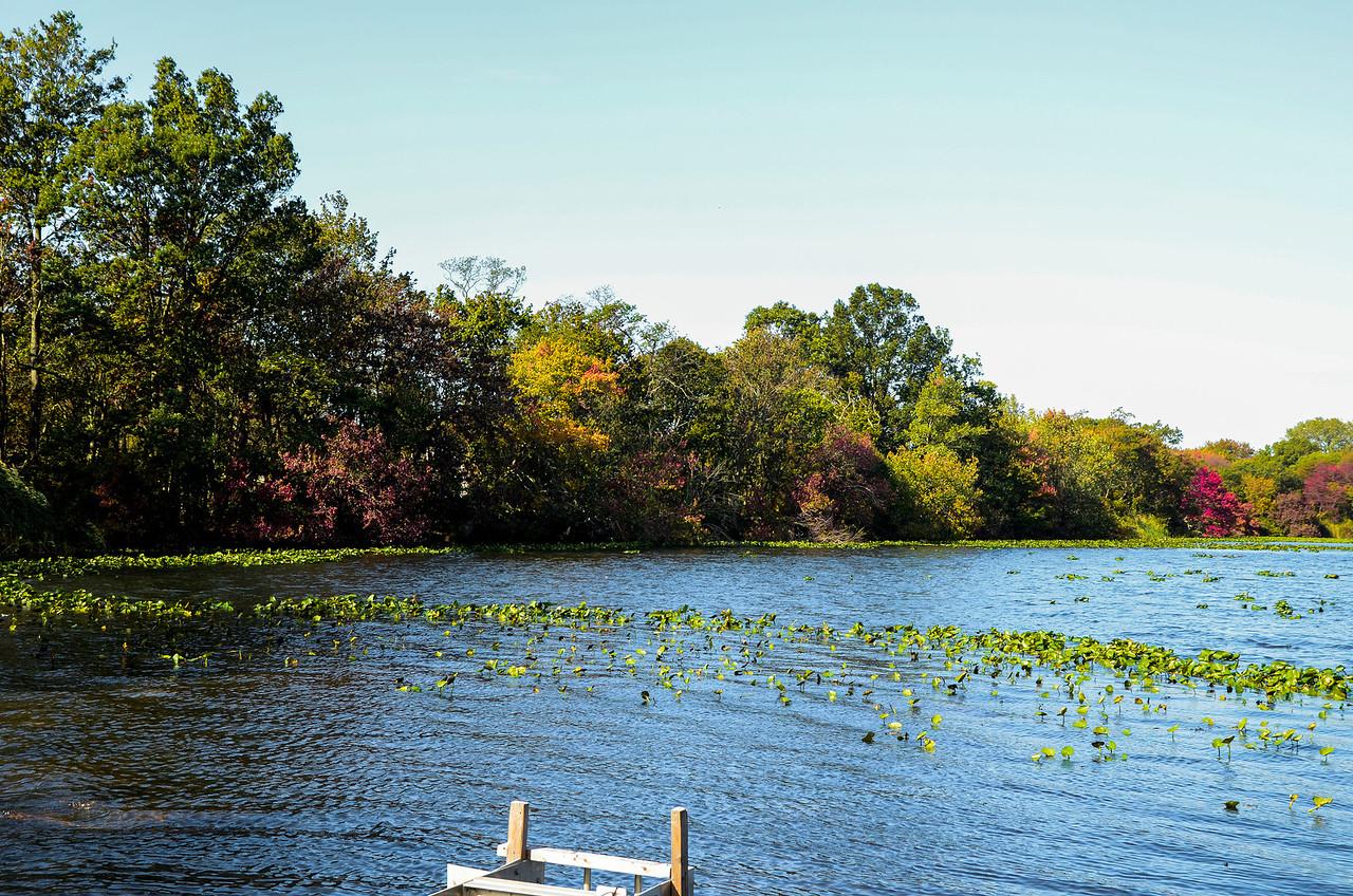 Massapequa Pond10-12-2013-1-3