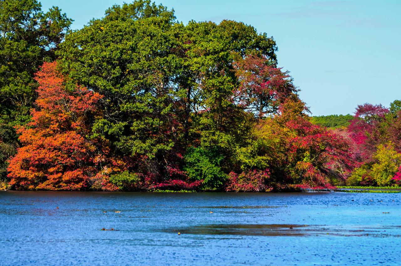 Massapequa Pond Less Blue 10-12-2013-1-9