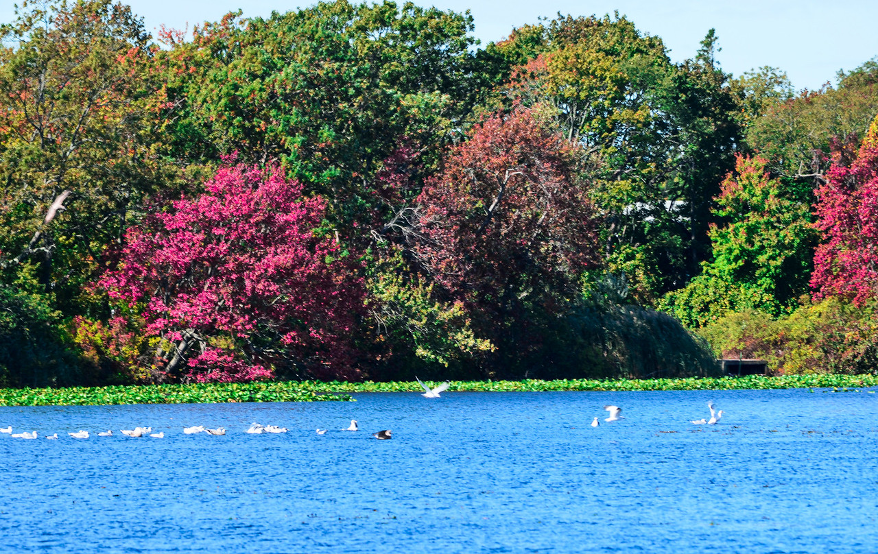 Massapequa Pond 10-12-2013-1-16