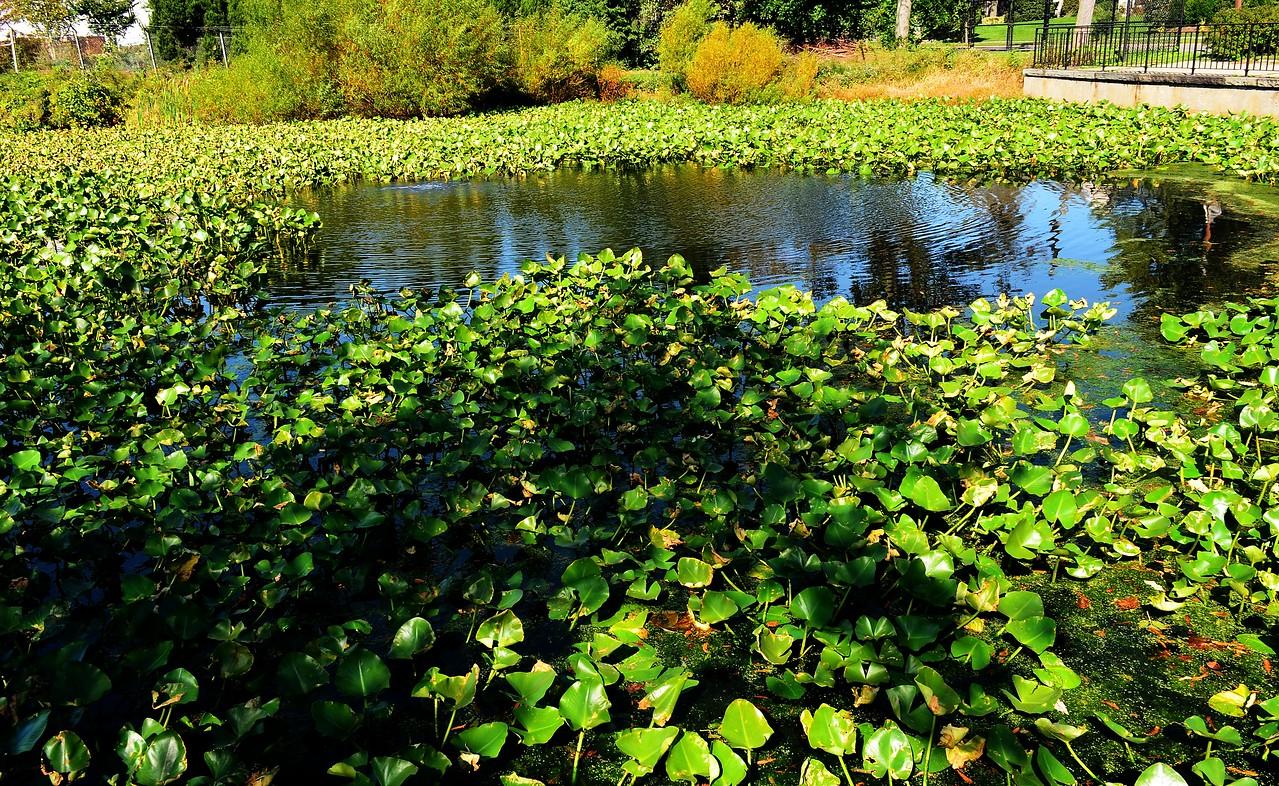 Loffs Lake 3