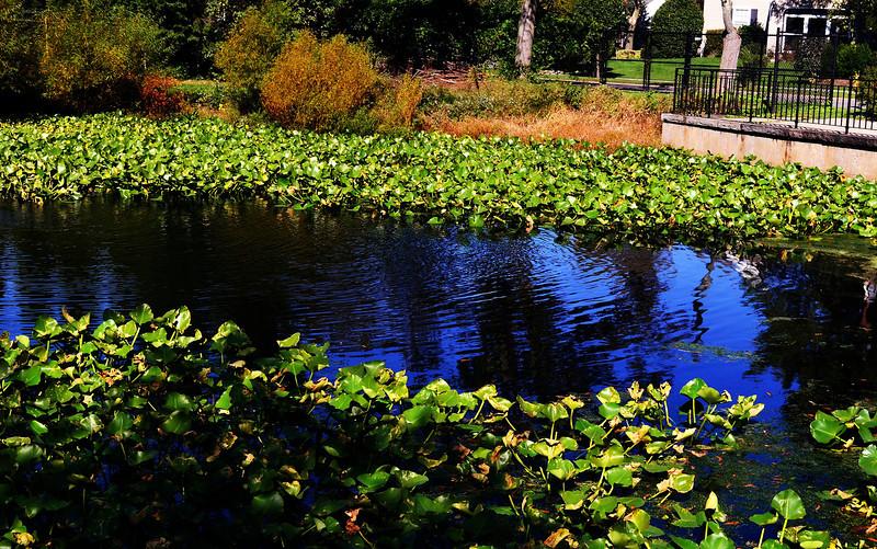 Loffs Lake 1