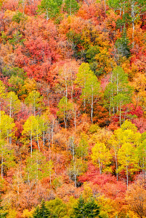 Autumn at Sundance - Wasatch Mountains - Utah