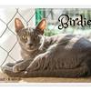 """""""Birdie"""" 6 mo female #839-337-062"""