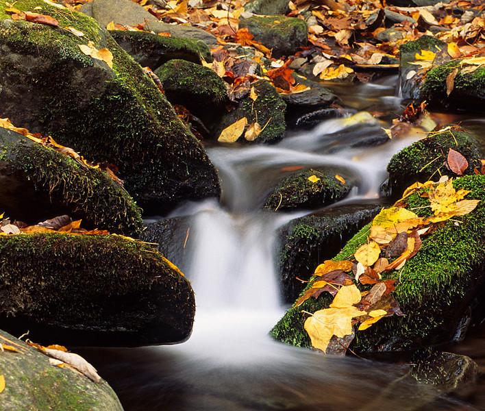 Small Fall Fall