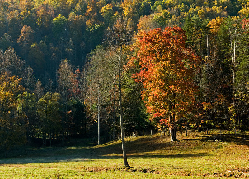 Early Light on Mountain Pasture