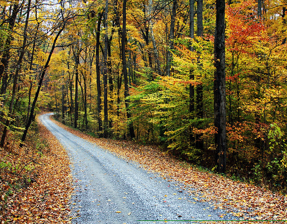 Road going to camps on south side of Trail of Tears State Park in Southern Illinois