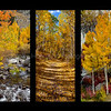 Fall Tryptic