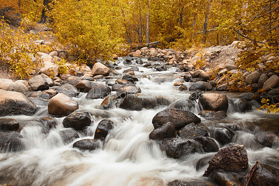 Autumn at Galena Creek~Mt rose Wilderness