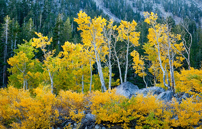 Mt Rose Aspens~Mt Rose Wilderness