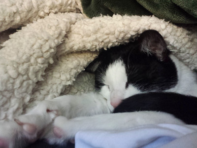 My snugglebug in a rug