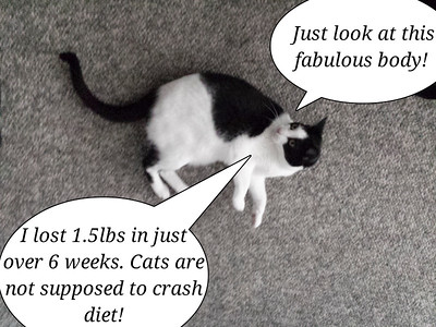 No crash diets for kitties